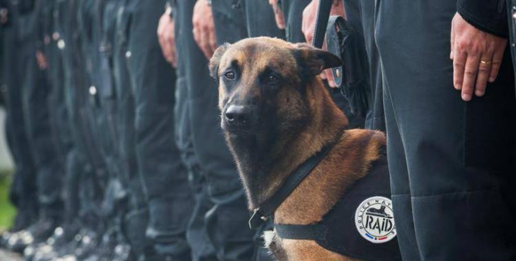 Conocé a Diesel, el perro de la Unidad anti-terrorista de Francia que murió en manos islámicas | El Diario 24