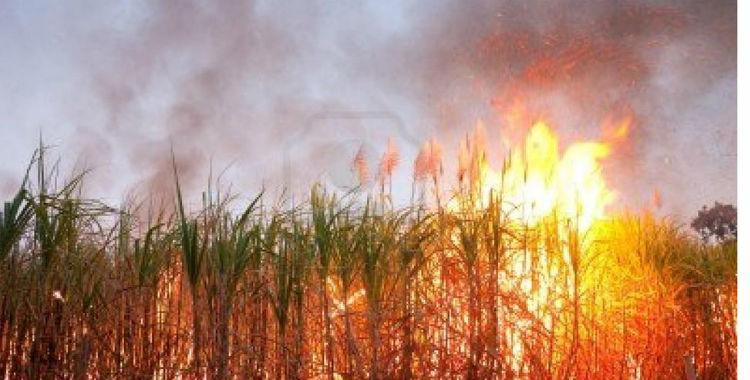 Defensa Civil registró en agosto un pico de llamadas por la quema de caña | El Diario 24