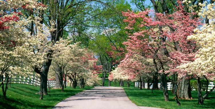 Según los astrónomos cordobeses, este año la primavera arranca el 22 se septiembre   El Diario 24