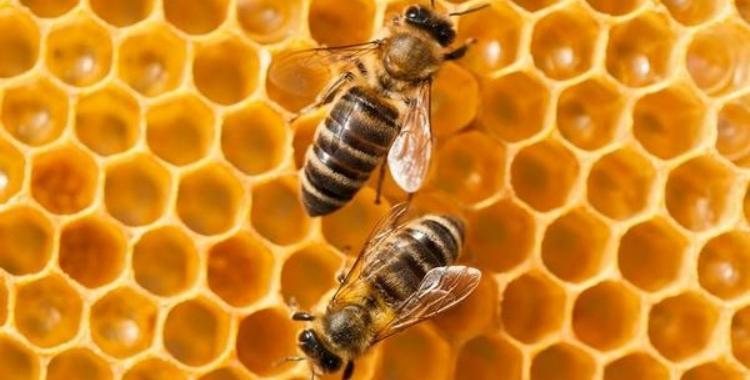 La presencia de abejas en el ártico son un signo del cambio climático | El Diario 24