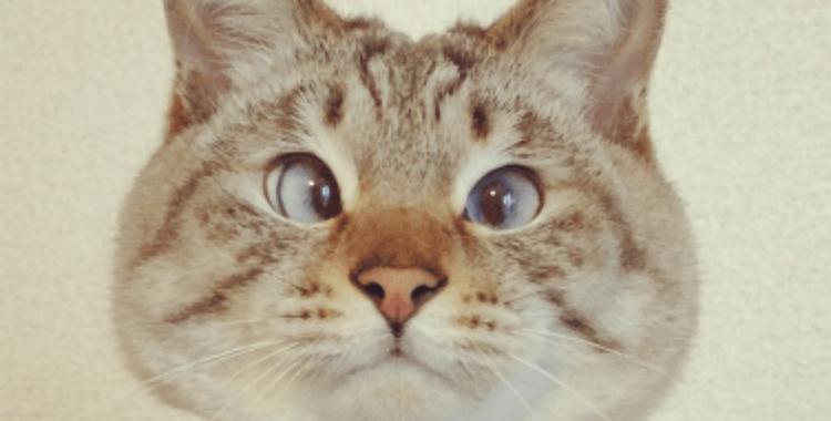 Conocé al tierno gato bizco que enamora a todos en Instagram | El Diario 24