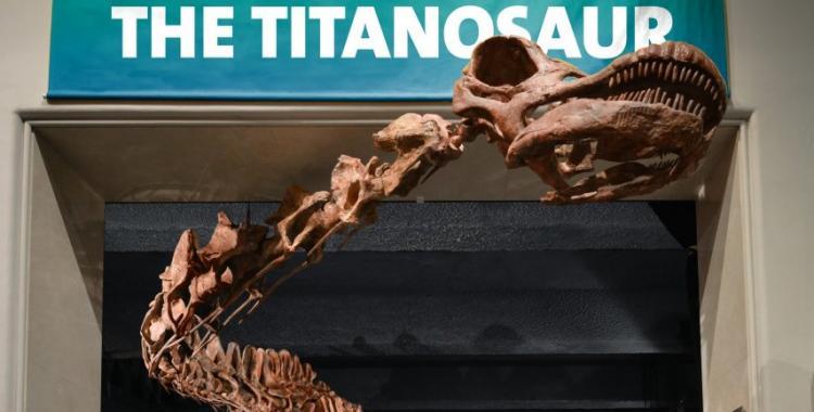 Traerán al país el dinosaurio más grande del mundo | El Diario 24