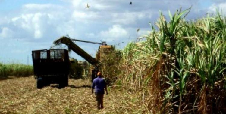 La Provincia autorizó el pago de los planes interzafra para cinco mil trabajadores   El Diario 24
