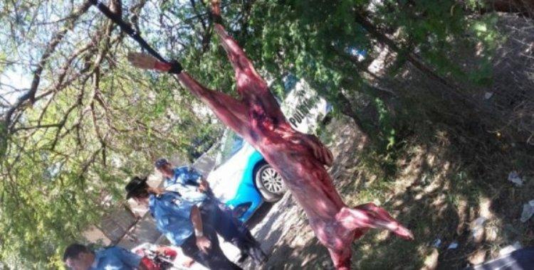 Otro caso de crueldad con animales: Despellejaron a un puma y lo colgaron de un árbol | El Diario 24