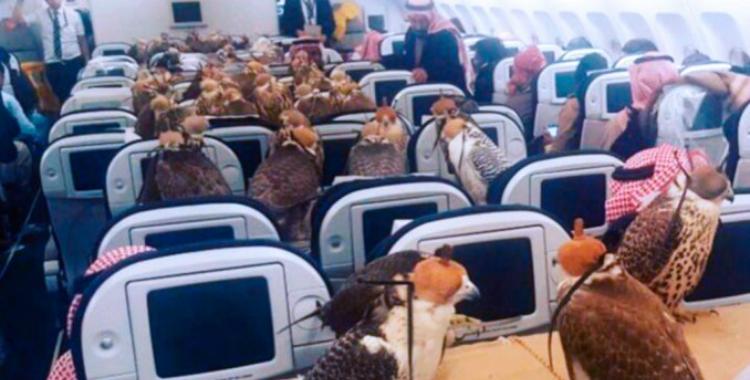 Insólito: un príncipe árabe viajó en avión con sus 80 halcones | El Diario 24