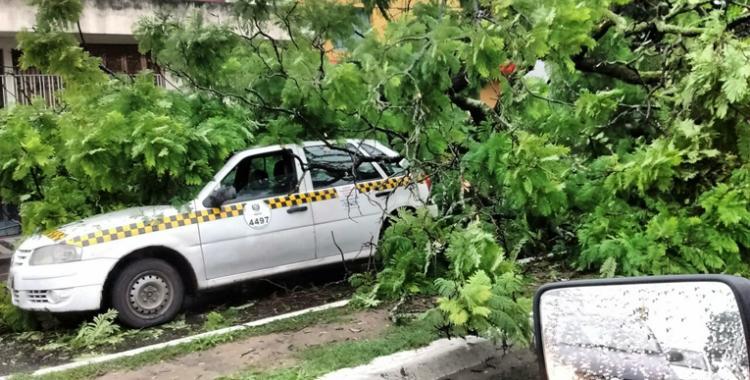 Tres taxis fueron aplastados por un enorme árbol que cayó en Juan B Justo y Martín Berho | El Diario 24