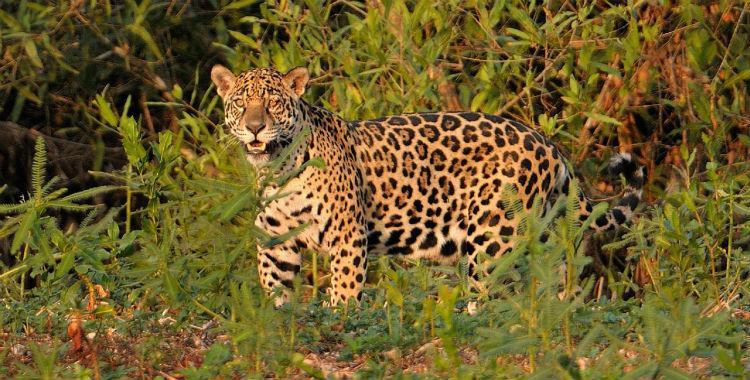 Seis especies animales están en peligro de extinción en el país | El Diario 24