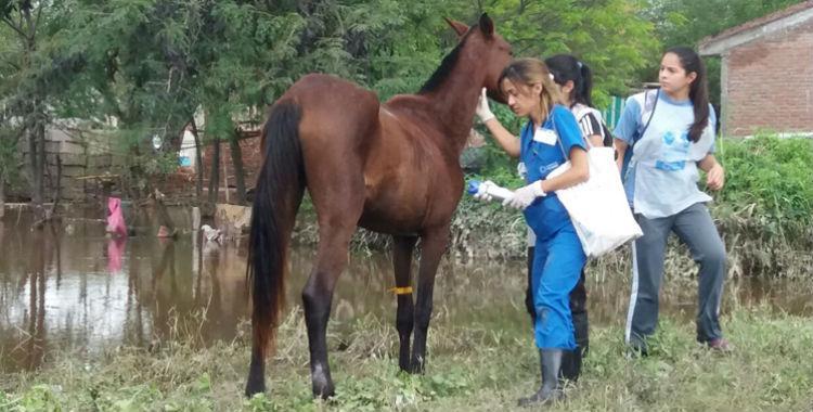 El SiProSa y Tucumán Mascotas vacunaron animales en las zonas inundadas   El Diario 24