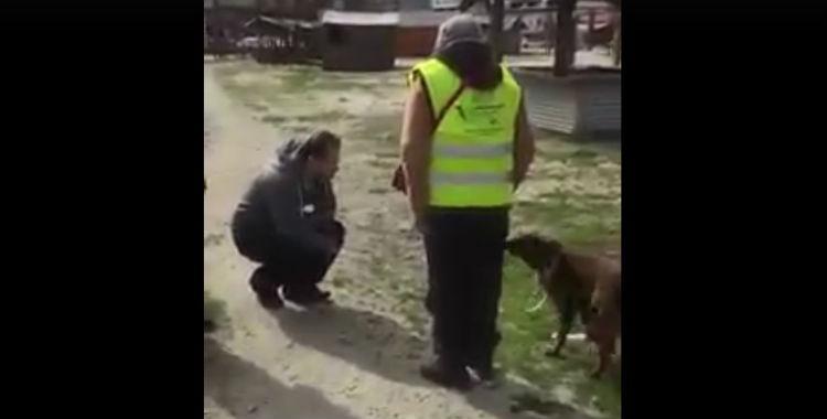 Una perrita se reencontró con su dueño después de dos años: mirá su reacción | El Diario 24
