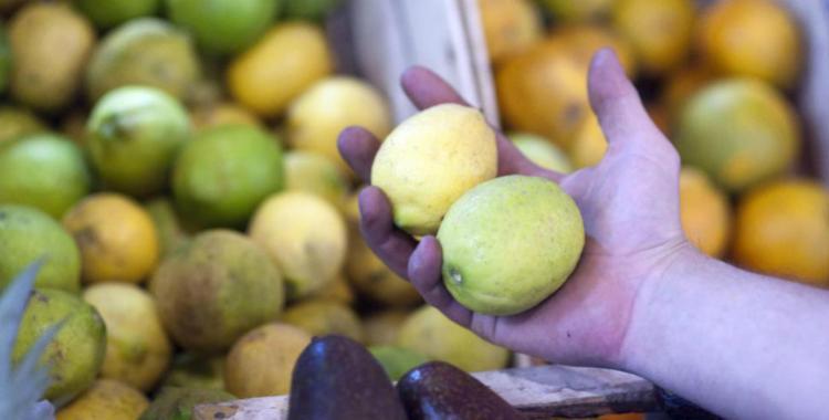 Manzur adelantó que México podría empezar a recibir limones tucumanos   El Diario 24