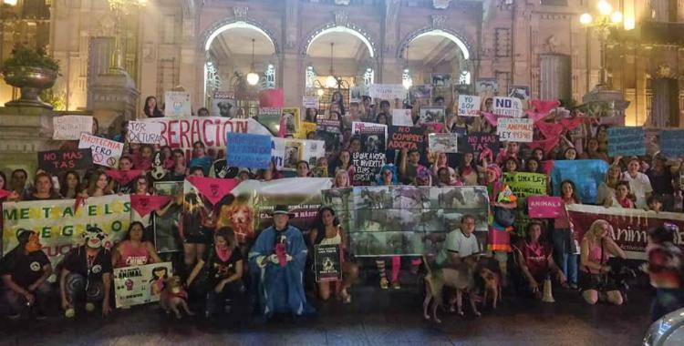 Convocan a una nueva marcha en defensa de los derechos de los animales   El Diario 24