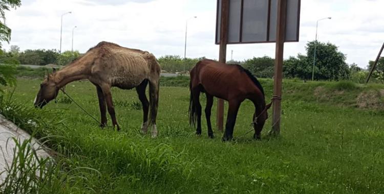 Pedro y Pablo, los caballos que le ganaron a la crueldad y a la muerte | El Diario 24