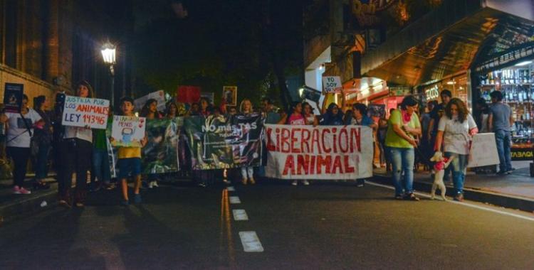 Tucumán vuelve a marchar contra el maltrato animal y la tracción a sangre   El Diario 24