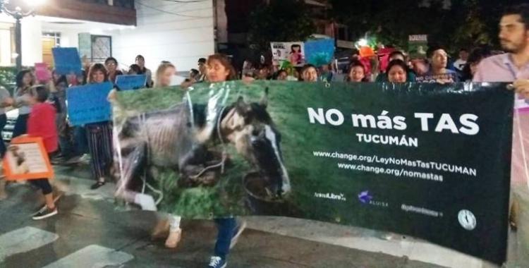 Los animalistas vuelven a marchar y suman apoyo político a los proyectos de ley | El Diario 24