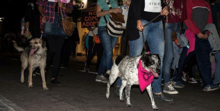 El Día del Animal será una jornada de lucha y concientización en Tucumán y en todo el país | El Diario 24