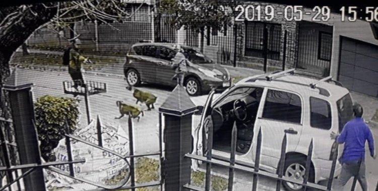 Dos perros salvaron a su dueño de una entradera en Quilmes   El Diario 24
