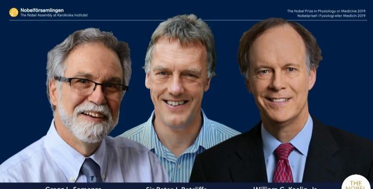 William Kaelin, Gregg Semenza y Sir Peter Ratcliffe premiados con el Nobel de Medicina 2019   El Diario 24