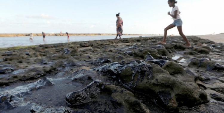 Muerte de pájaros y tortugas en las playas de Brasil por un derrame de petróleo | El Diario 24