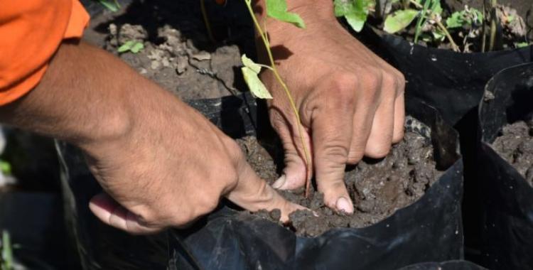 Tafí Viejo produce 2000 plantines buscando reforestar la ciudad | El Diario 24