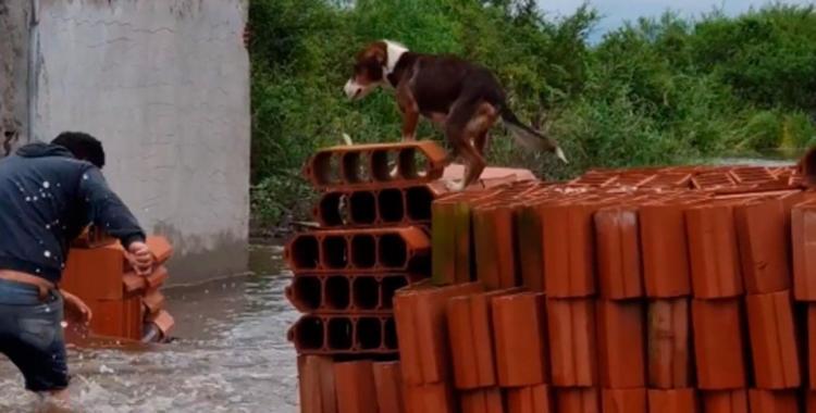 En medio de la inundación, resguardó a su perro en una pila de ladrillos | El Diario 24