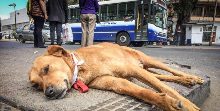 Campaña para ayudar a los perros en el norte de Salta | El Diario 24