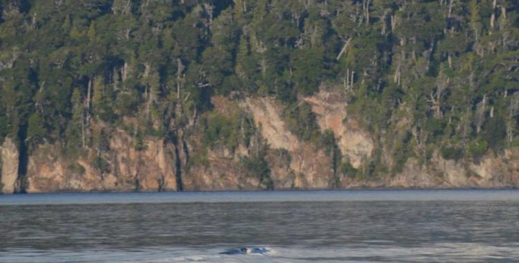 ¿El Nahuelito existe? viralizaron imágenes de una extraña criatura en el Lago Nahuel Huapi | El Diario 24
