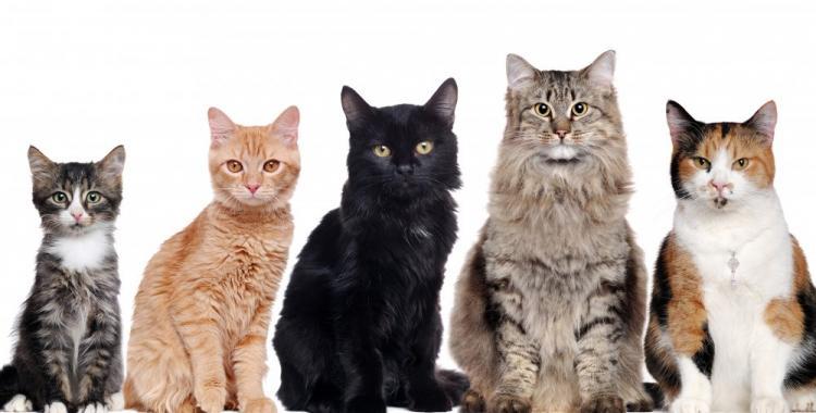 Conocé el poder de tu gato y el significado de su pelaje según el color | El Diario 24