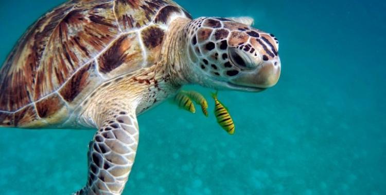Por qué el 16 de junio es el Día Mundial de las Tortugas Marinas   El Diario 24