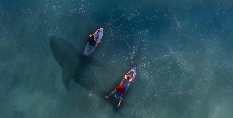 Video: Un tiburón blanco acechó a un grupo de surfistas y quedó grabado | El Diario 24