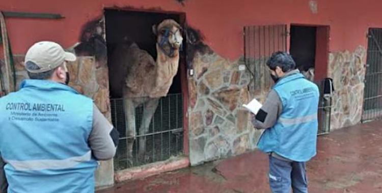 Denuncian gravísimas irregularidades en un zoológico y exigen su cierre definitivo   El Diario 24