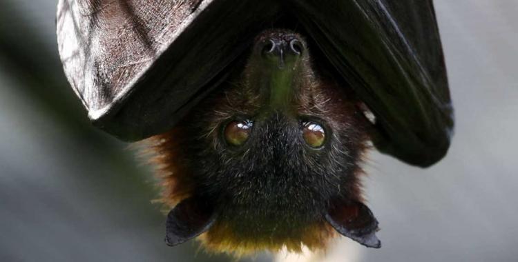 Aseguran que la deforestación y el turismo lograrían que más virus salten de animales a humanos | El Diario 24