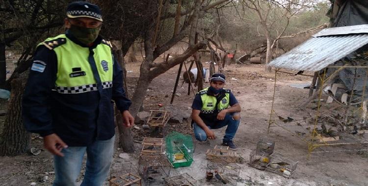 Burruyacú: tenían en cautiverio a más de 250 aves, entre ellas algunas en peligro de extinción | El Diario 24