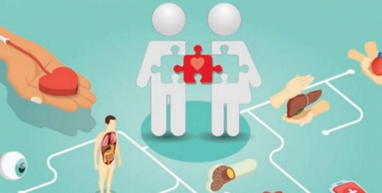 Por qué el 14 de octubre es el Día Mundial de la Donación de Órganos, Tejidos y Trasplantes | El Diario 24