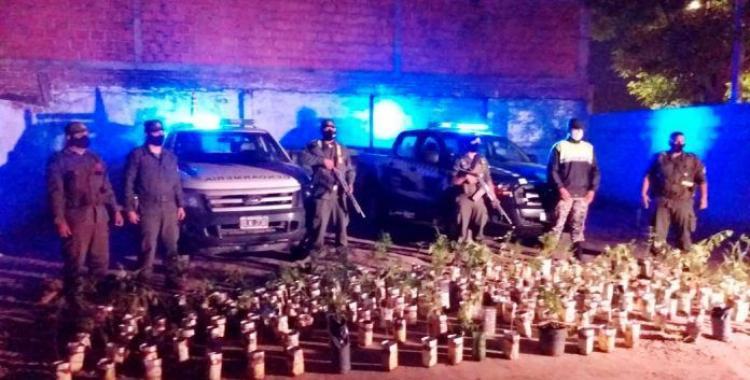 Alberdi: Fueron a dispersar un partido de fútbol, y se encontraron con 214 plantas de marihuana | El Diario 24