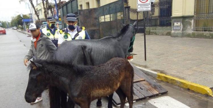 Recuperan animales en cautiverio: un puma, un oso hormiguero, aves y caballos fueron rescatados | El Diario 24