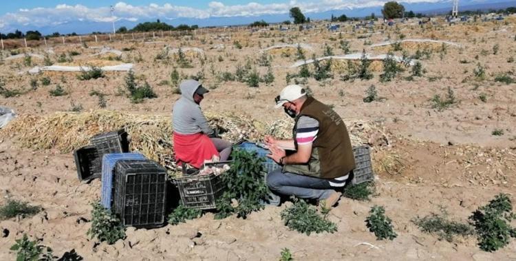 Realizaron inspecciones y detectaron a 7 niños trabajando en establecimientos rurales | El Diario 24