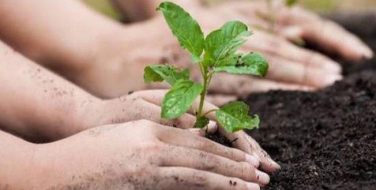 Plantar un hijo, leer un árbol, arbolear un leo | El Diario 24