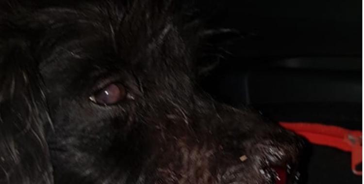 Indignante: le ataron un petardo al hocico de un perro callejero y lo detonaron | El Diario 24