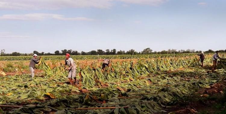 Fondo Especial del Tabaco: cronograma de pago en Tucumán   El Diario 24