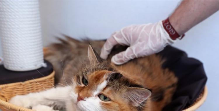 Qué síntomas tienen y cómo cuidar a los animales con coronavirus | El Diario 24