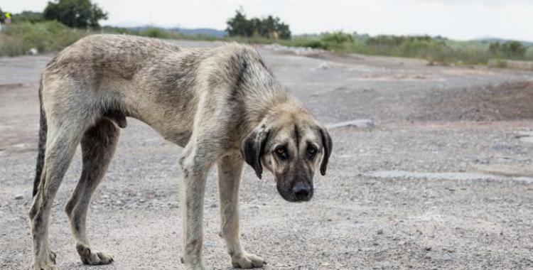 El caso de maltrato animal que conmueve a toda una provincia   El Diario 24