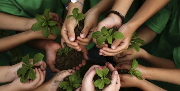 Por qué el 26 de enero es el Día Mundial de la Educación Ambiental | El Diario 24