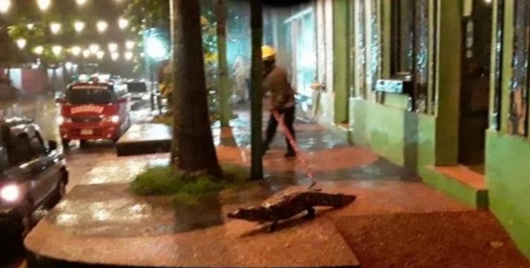 VIDEO: Yacarés causaron temor al invadir las calles de una ciudad | El Diario 24