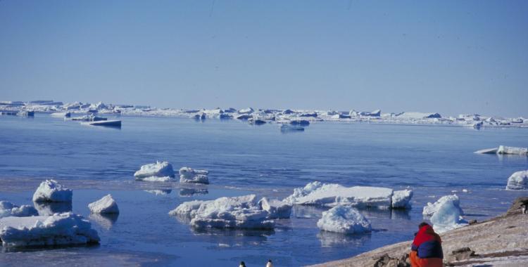 Una ola de calor en la Antártida generó alarmantes cambios en el ambiente | El Diario 24