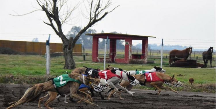 Detienen a padre e hijo por organizar una carrera de perros galgos con más de 400 personas | El Diario 24