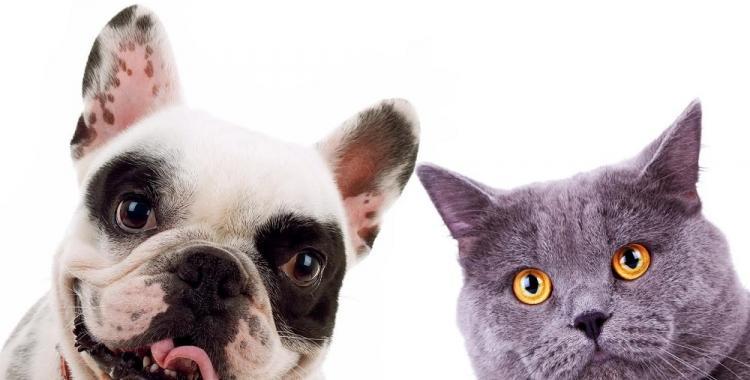 Por qué el 29 de abril es el Día del Animal | El Diario 24