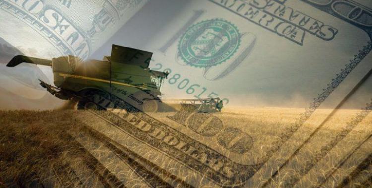Cómo invertir en el negocio cerealero y ganar hasta un 14% anual fijo en dólares | El Diario 24