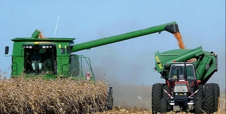 Cosechaban maíz y se les cruzó un enorme jabalí de 270 kilos (hay foto)   El Diario 24