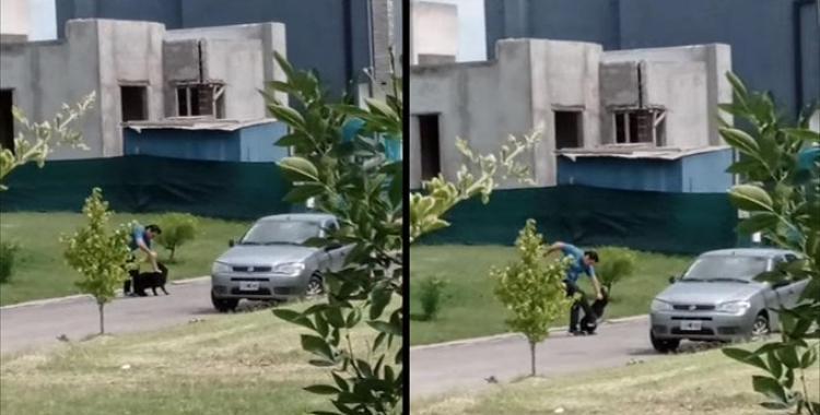 Golpeó salvajemente a su perro en un country de Tafí Viejo y fue imputado   El Diario 24