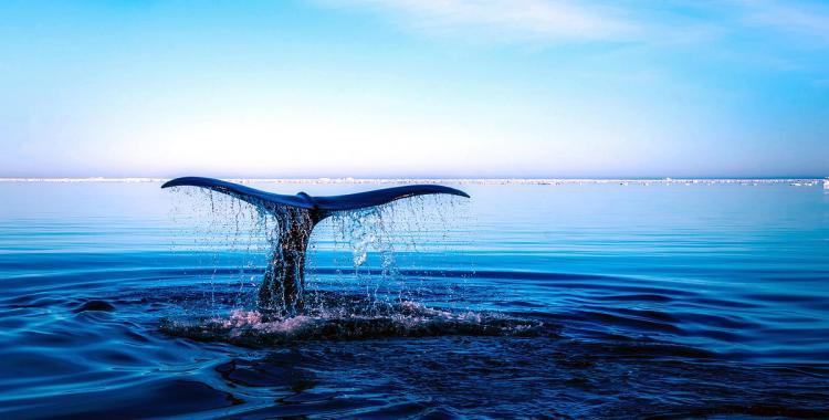 Por qué el 8 de junio es el Día Mundial de los Océanos | El Diario 24